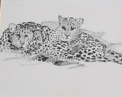 Two Leopards